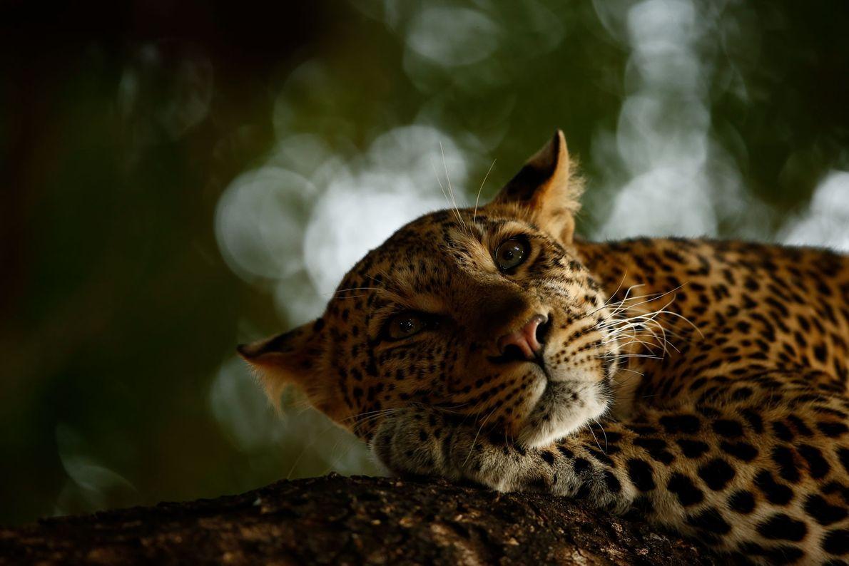 Skye Meaker, 16 ans, a été nommé Jeune photographe animalier de l'année pour cette image d'un ...