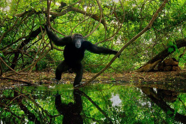 Aujourd'hui, 27 pays font l'objet de sanctions commerciales sur les espèces sauvages pour non-conformité avec la ...