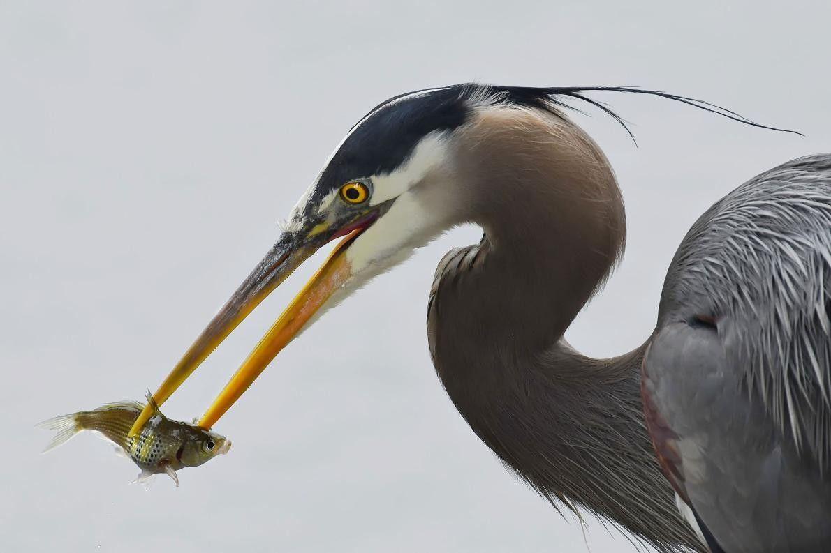 « En tant que photographe, il vous arrive parfois d'être chanceux (contrairement à ce poisson). Ce ...
