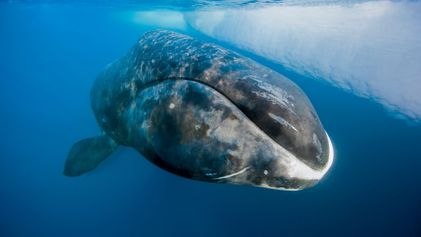 Quel est l'animal qui vit 11 000 ans ?