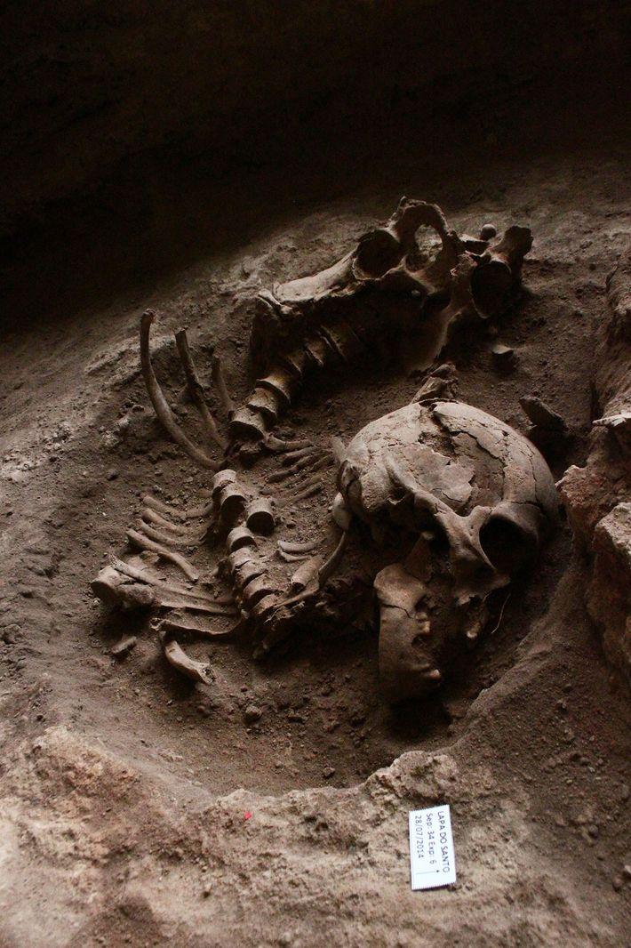 Il y a plus de 10 000 ans, les peuples amérindiens du Brésil commencèrent à enterrer ...