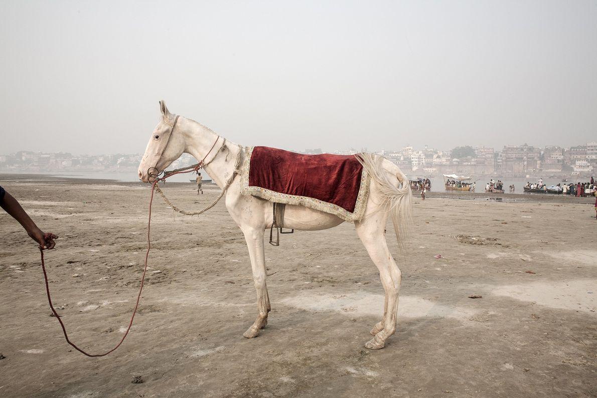 Un cheval sellé sert au déplacement des hindous le long des rives du Gange.