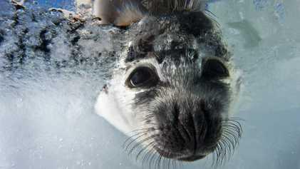 La beauté des phoques en images