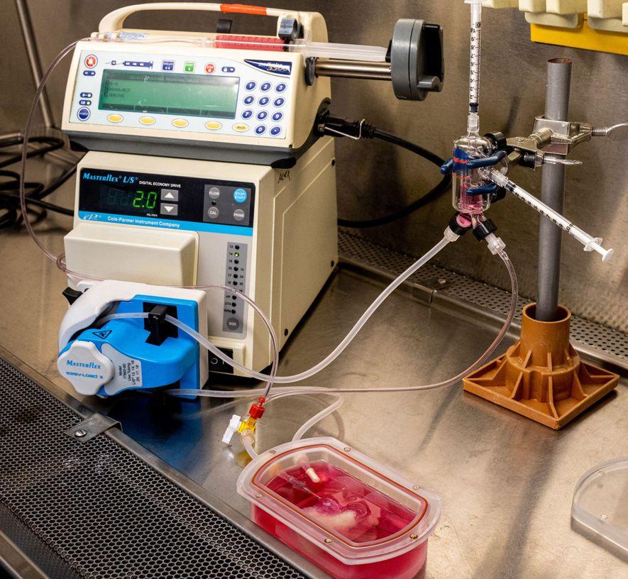 Le mini-foie est maintenu en fonctionnement par un dispositif appelé bioréacteur qui lui fournit l'oxygène et ...