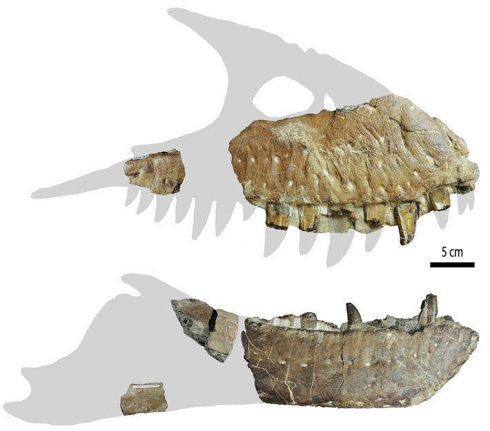 Pour le moment, ces fragments de crâne sont tout ce qu'il reste des Thanatotheristes. Il est ...