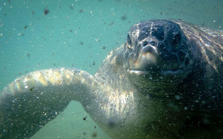 02_turtle_cayman_island