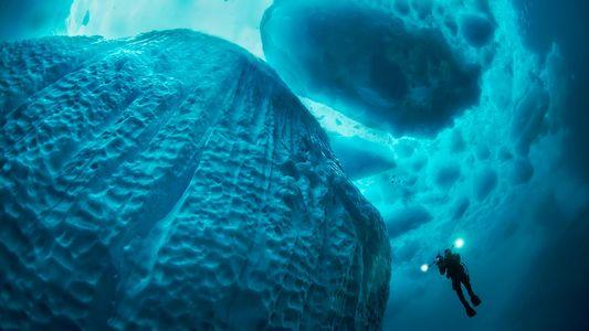 Il y aurait 10 millions d'espèces encore inconnues sur Terre