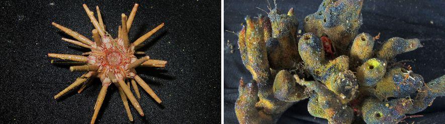 03-recif-amazone-decouvert-corail