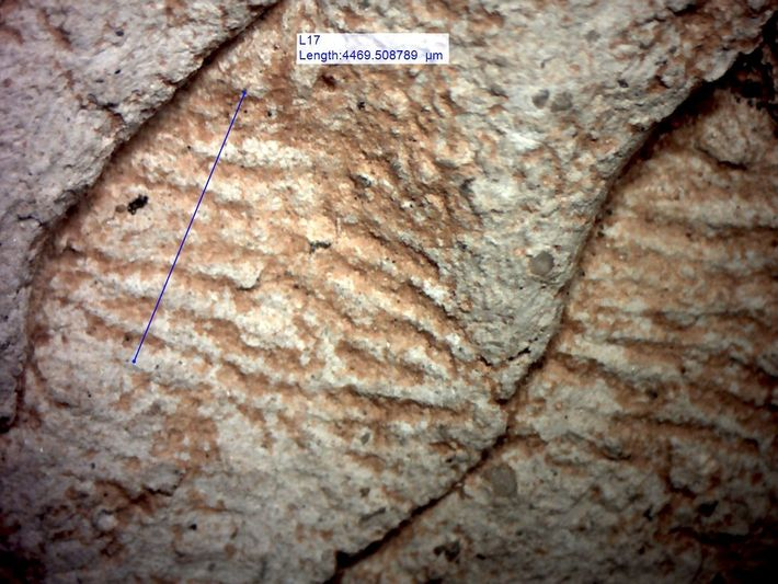 Les chercheurs ont analysé la largeur des empreintes digitales laissées par les potiers sur la céramique, ...