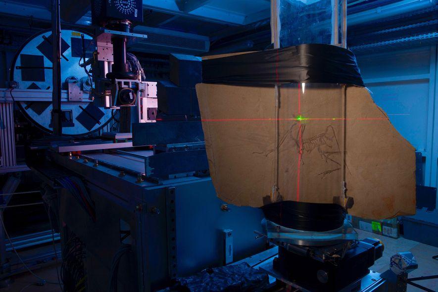 L'Archaeopteryx découvert à Munich passe sous le scanner à l'European Synchrotron Radiation Facility.