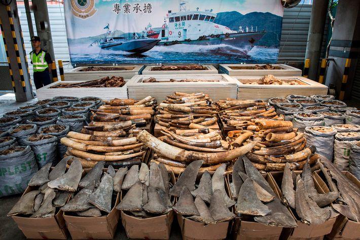 Le trafic d'animaux sauvages, un marché noir qui représenterait plusieurs milliards d'euros, est peu risqué et ...