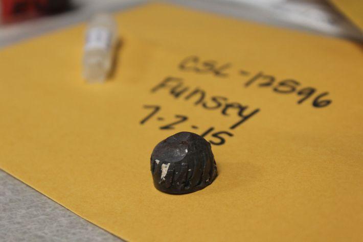 Le Centre pour Mammifères Marins de Sausalito en Californie conserve les fragments de balle retirés des ...