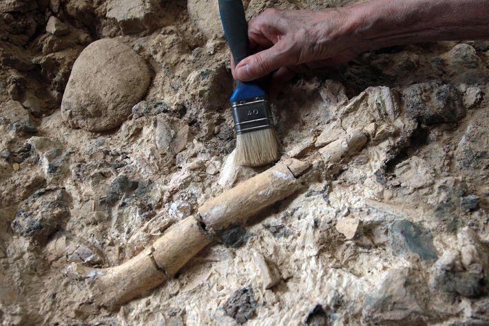 Un scientifique travaille sur le site de Caune de l'Arago en France, un autre site de ...