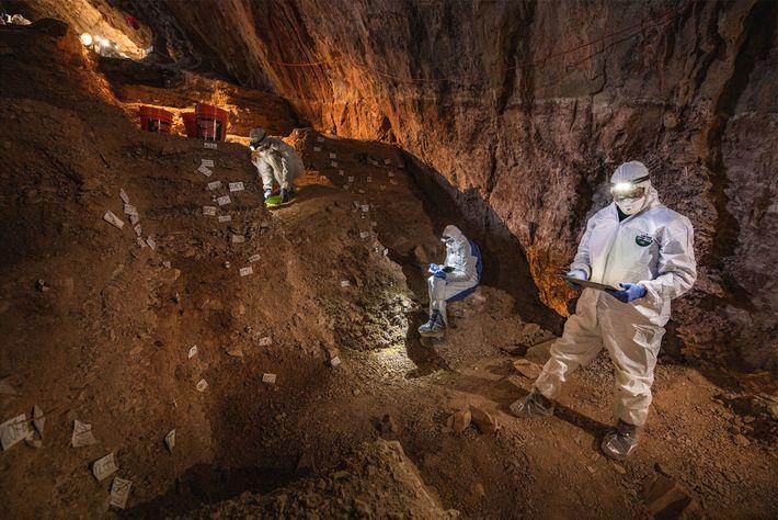 Les chercheurs comparent les données sur la stratigraphie de la grotte de Chiquihuite en vue de ...
