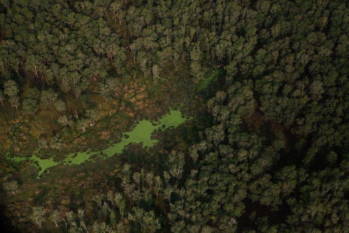Vue aérienne de la forêt vert émeraude qui recouvre la chaîne des Cardamomes, au Cambodge.