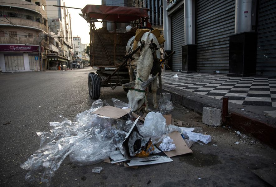 Un âne fouille une pile de plastique et d'autres déchets à la recherche de nourriture pendant que les collecteurs nettoient les rues de la ville de Gaza au petit matin.