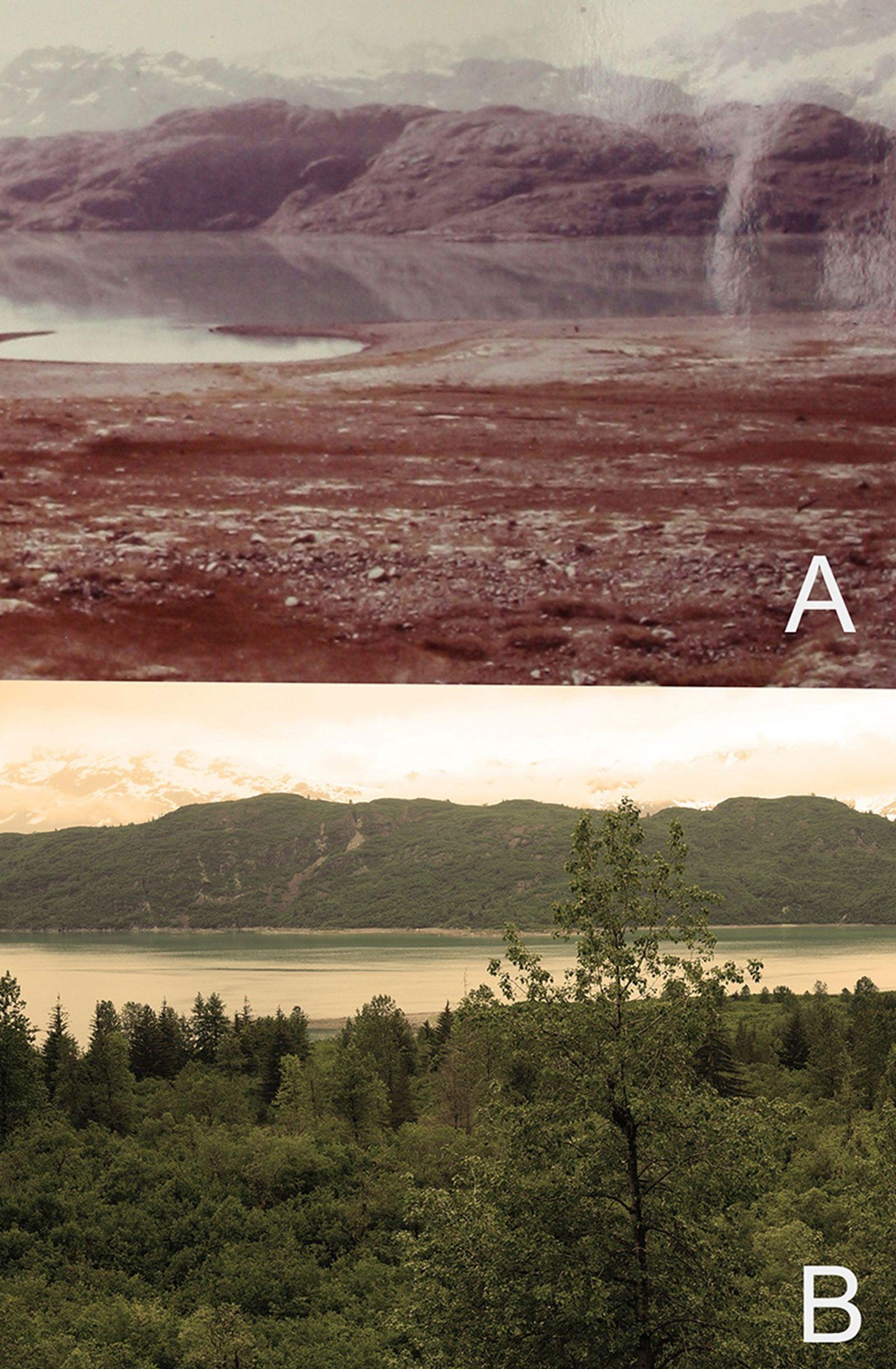 Au cours de l'étude, la forêt s'est rapidement répandue dans cette région.