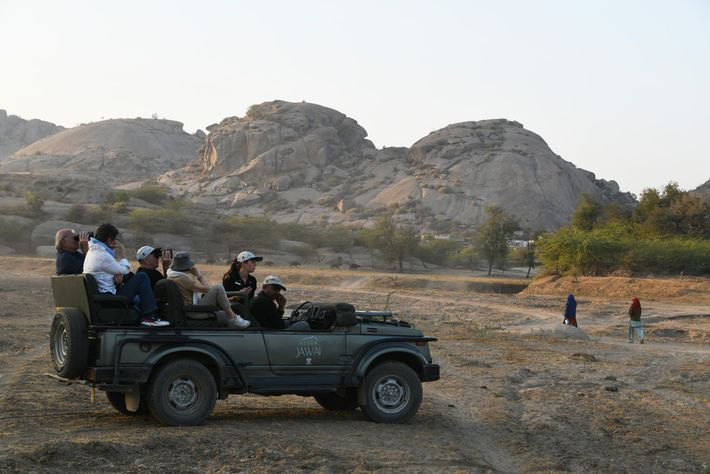 Des touristes observent un léopard mâle sur les rochers à proximité. Les villages de Bera cherchent ...