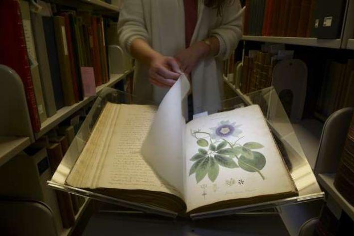 Anne Sauer, directrice de la Rare and Manuscript Collections à l'université de Cornell, feuillette les pages ...