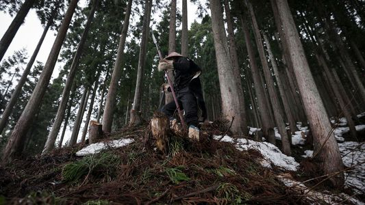 Au Japon, la tradition séculaire de la chasse à l'ours