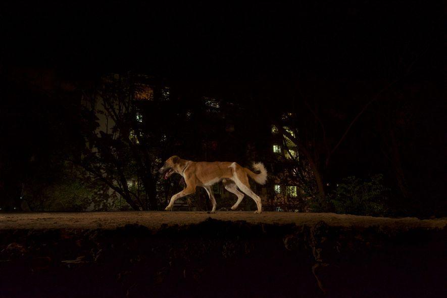 Une caméra à distance photographie un chien qui traverse un vieux pont dans le parc national ...