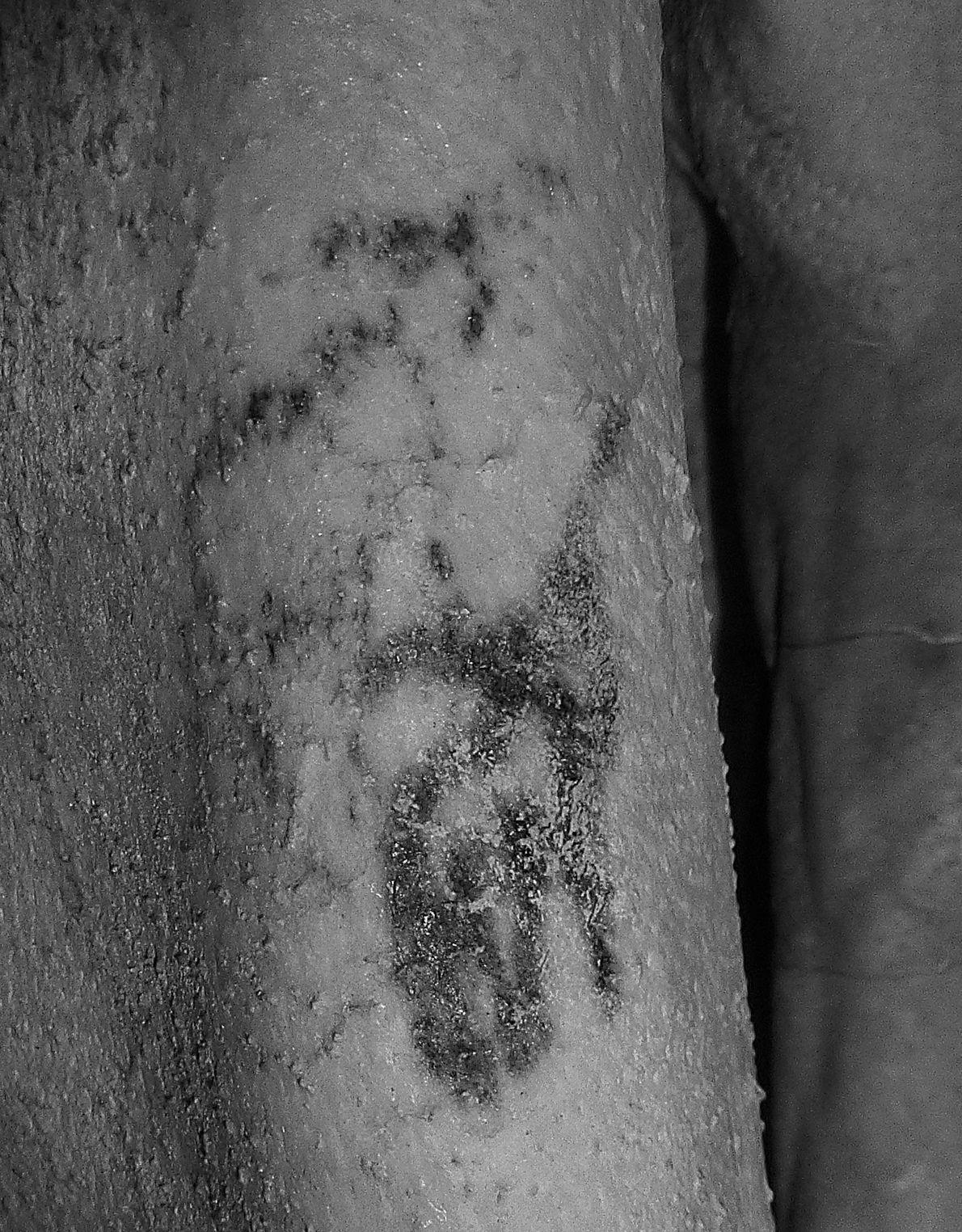 Sous la lumière infrarouge, les détails du tatouage sur sa peau vieille de 5000 ans deviennent ...