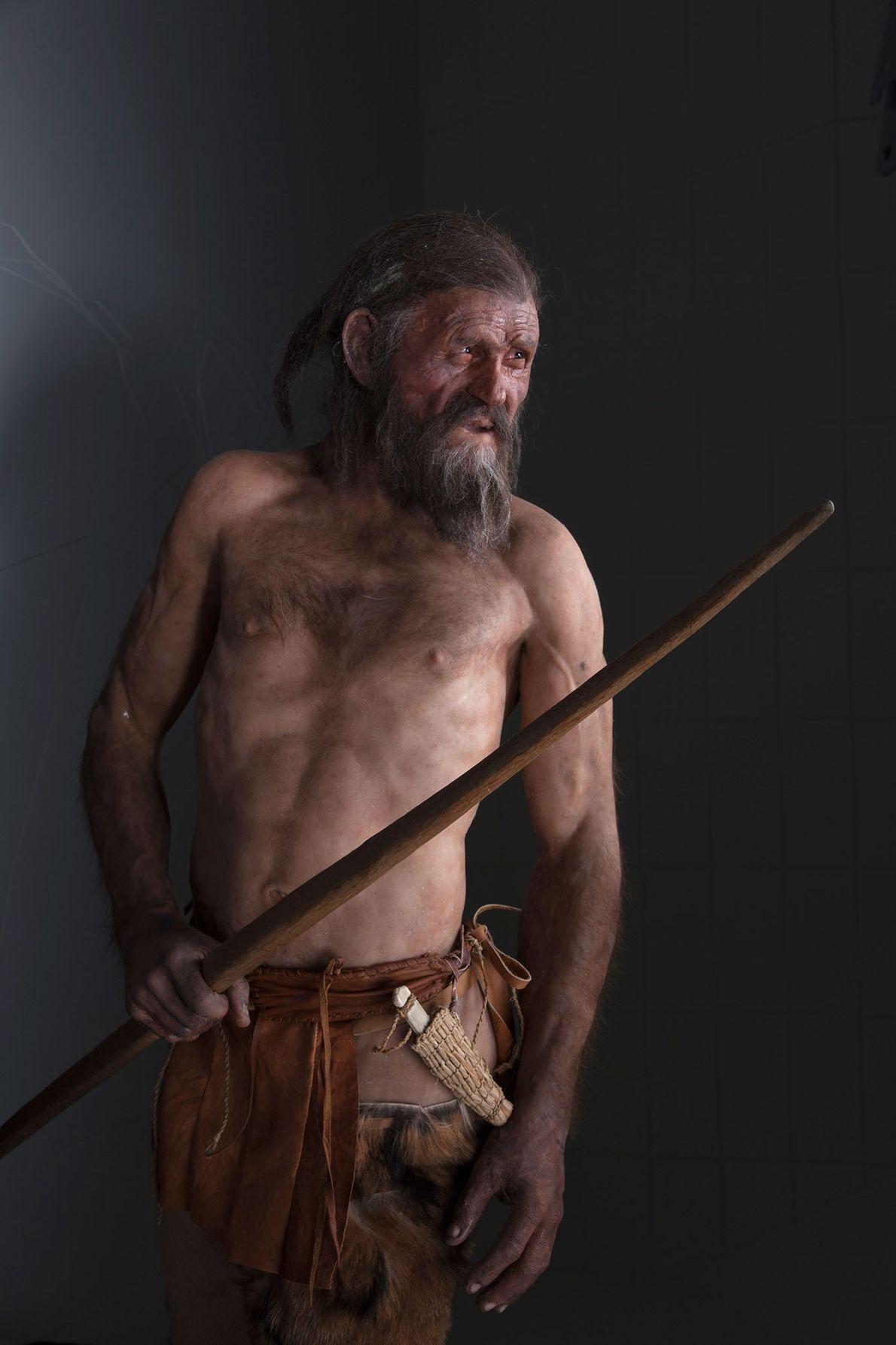 Une reconstitution de l'homme des glaces âgé d'une quarantaine d'années.
