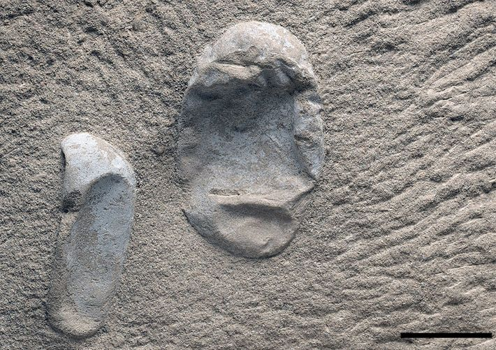 Deux des œufs de ptérosaures récemment trouvés. Les paléontologues expliquent qu'ils ont mis au jour des ...