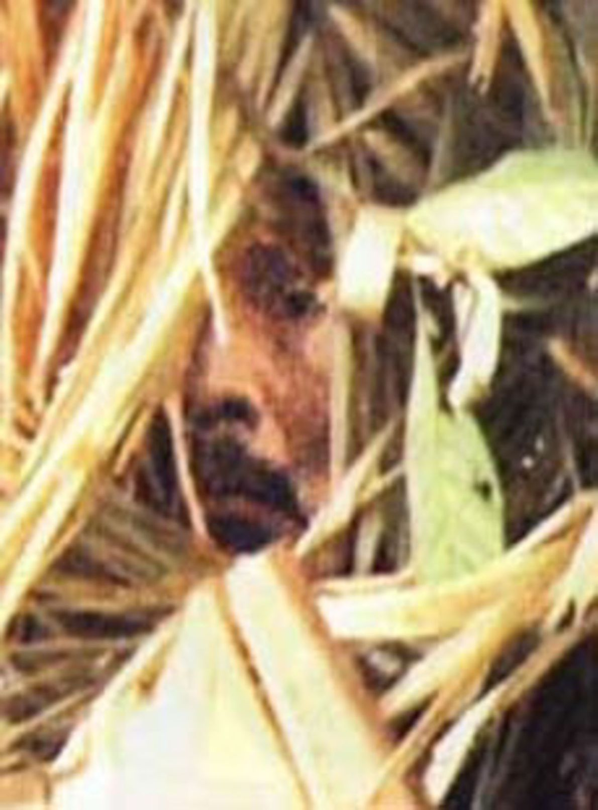 """Image agrandie du documentaire de Vincent Carelli, sorti en 2009 et intitulé """"Corumbiara"""". On y voit ..."""
