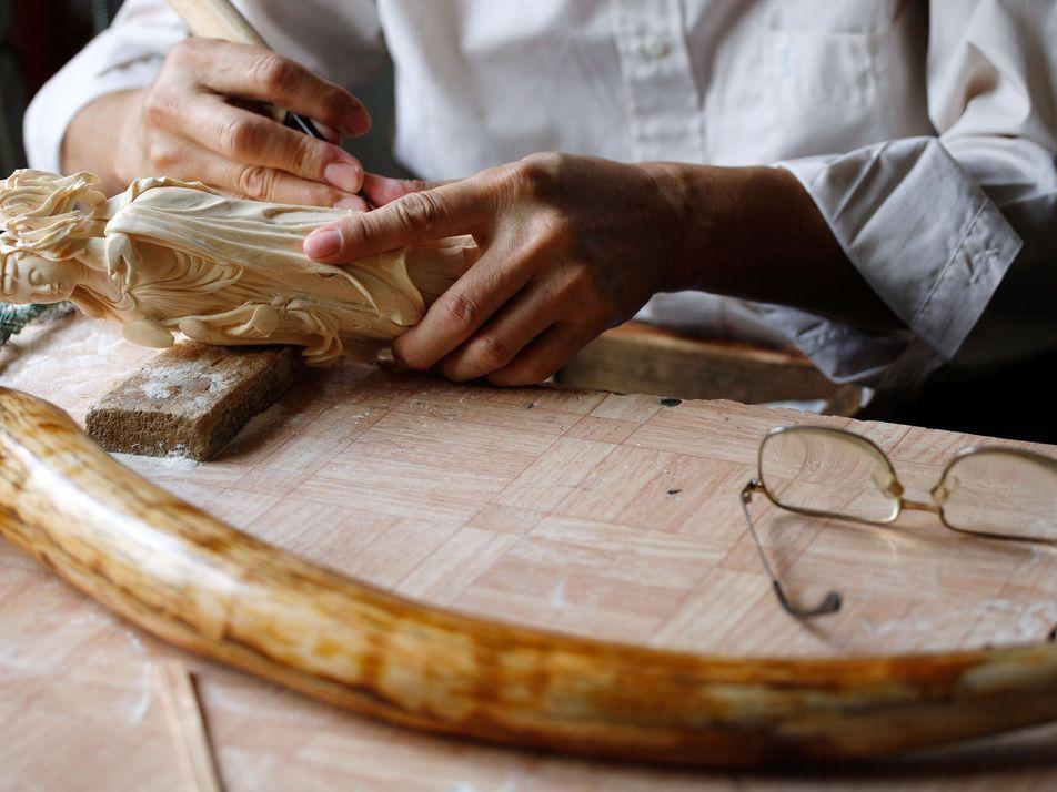 La Chine interdit totalement le commerce de l'ivoire
