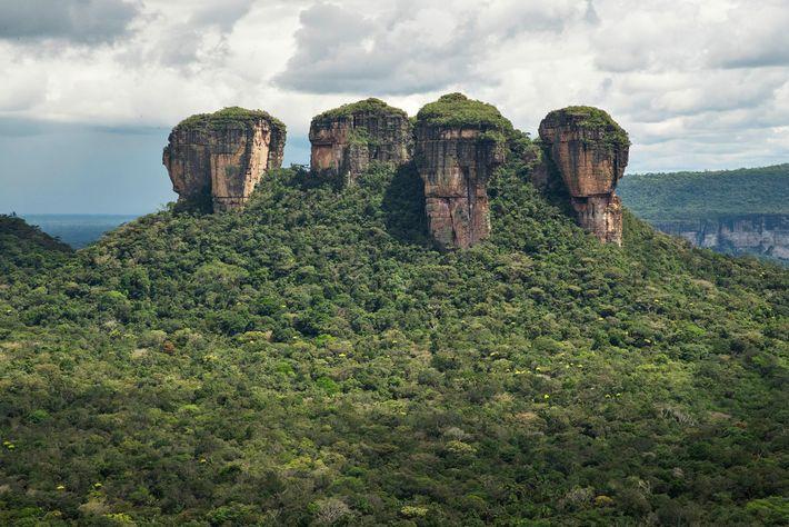 Le parc national de la Serranía de Chiribiquete, qui abrite la plus grande aire de forêt ...