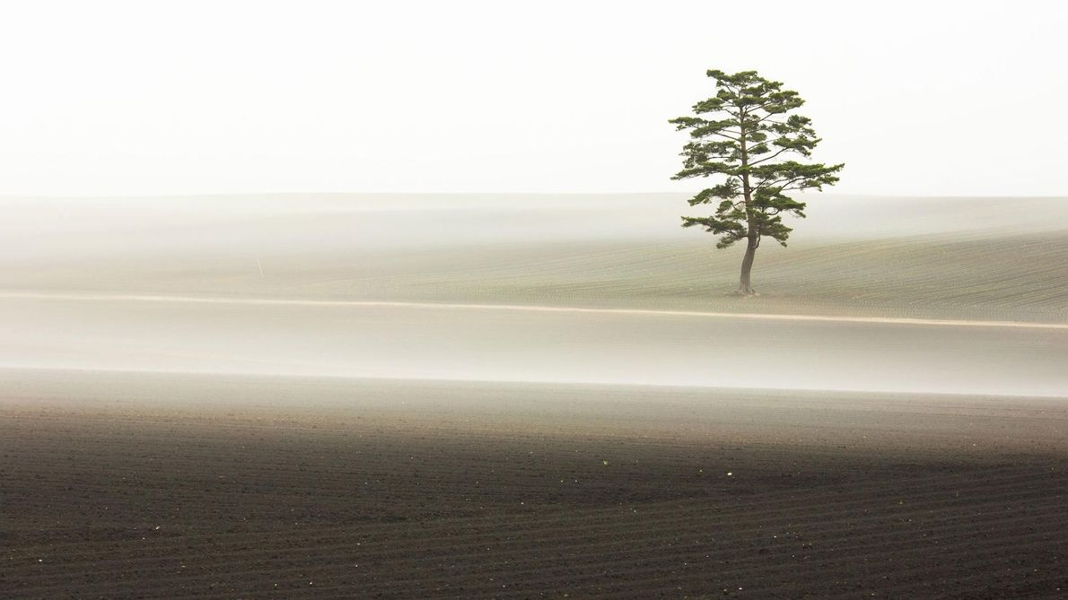 « J'ai été fasciné par le brouillard matinal qui, parfois, s'écoule sur un champ asséché où ...
