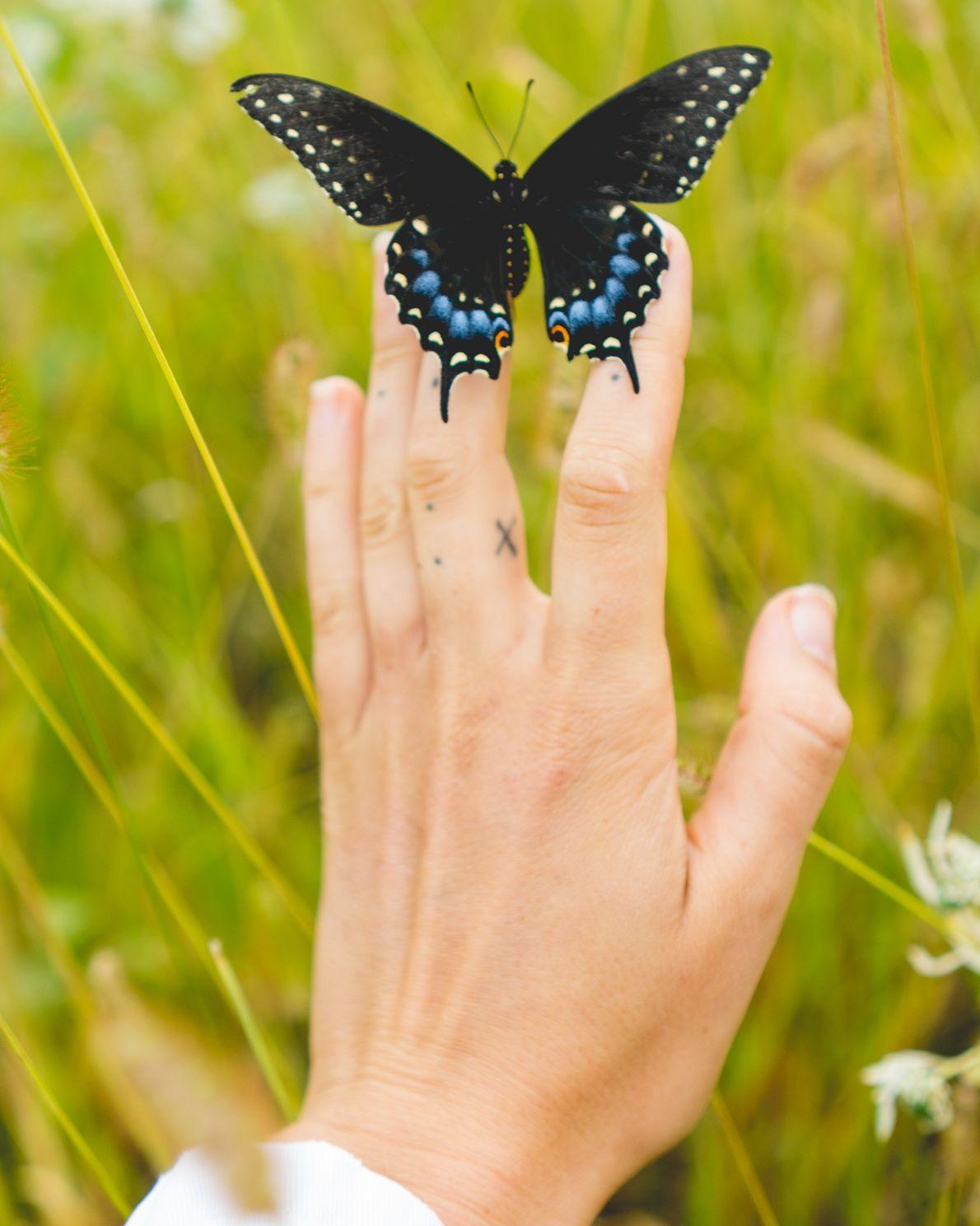 Un papillon du céleri se pose sur la main de la photographe Madeline Cass.
