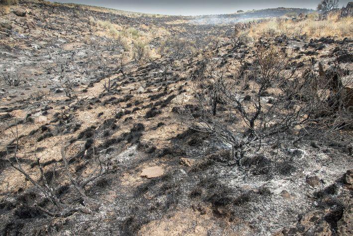 Sur cette image, on voit une terre entièrement brûlée suite à l'incendie qui s'est déclenché dans ...