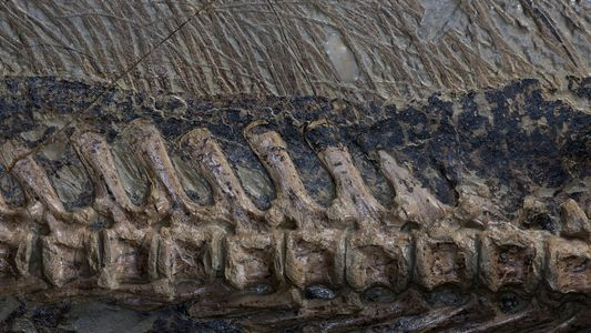 Les fossiles de dinosaures les plus impressionnants du monde en images