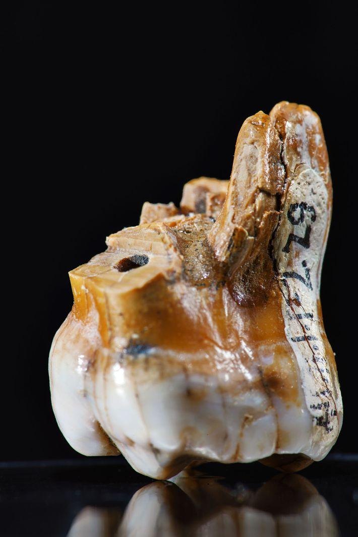 Tout ce que nous savons sur l'Homme de Denisova provient de l'analyse scientifique de trois dents ...