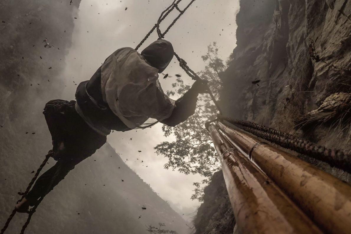 Ozturk a installé des appareils photo sur la tige de bambou principal de Mauli.