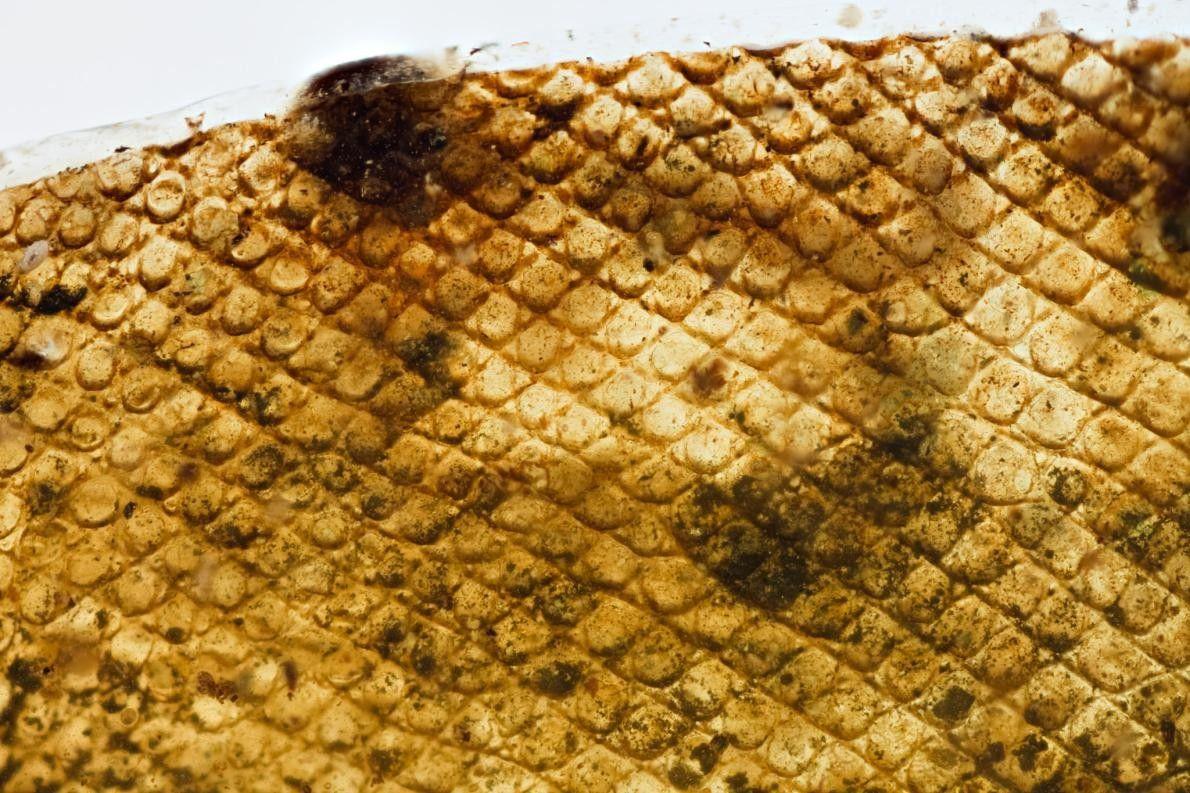 Un gros plan de ce morceau de peau montre une pigmentation et des formes régulières.