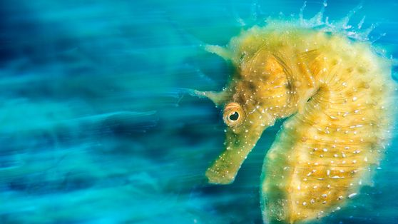 11 photos incroyables qui révèlent le monde sous-marin caché