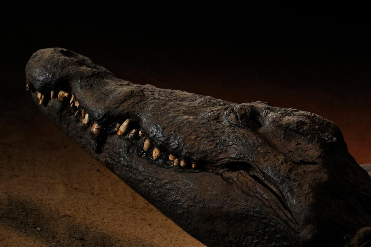 Ce crocodile momifié semble présenter un sourire énigmatique des milliers d'années après sa mort. Les animaux ...