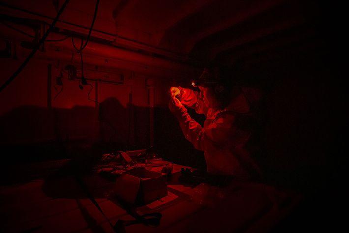 Morgan Bender utilise une seringue pour prélever un échantillon de sang de deux morues polaires. Seule ...