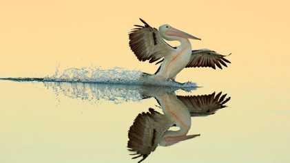 12 images consacrant la beauté des oiseaux