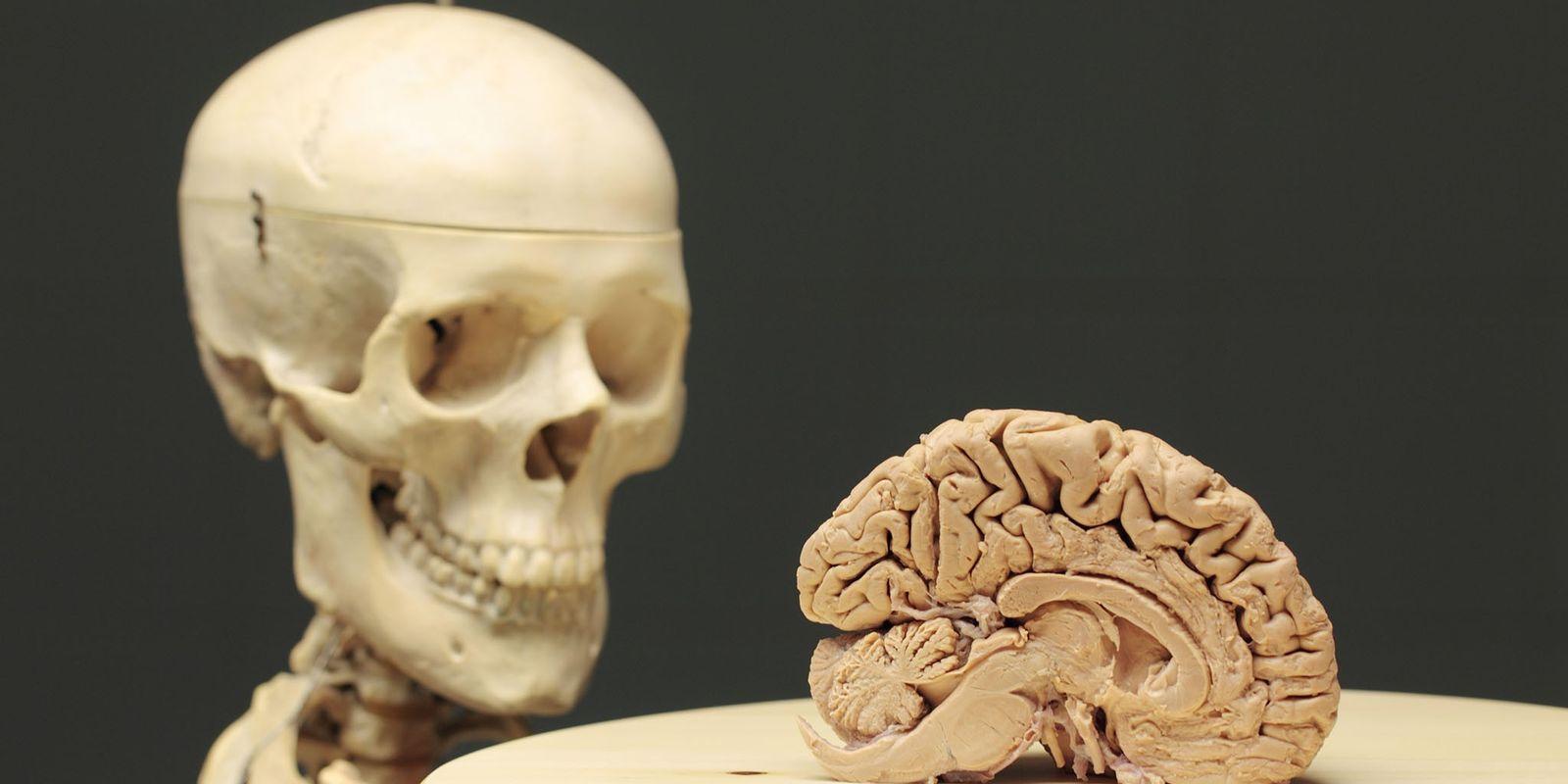 La connexion corps cerveau est plus importante qu'on ne le croyait