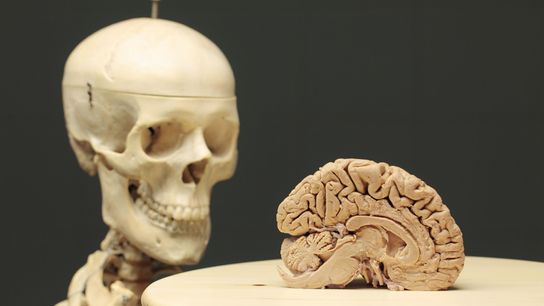 Considérer le cerveau comme un organe semblable à un ordinateur, c'est ignorer l'influence de notre corps ...
