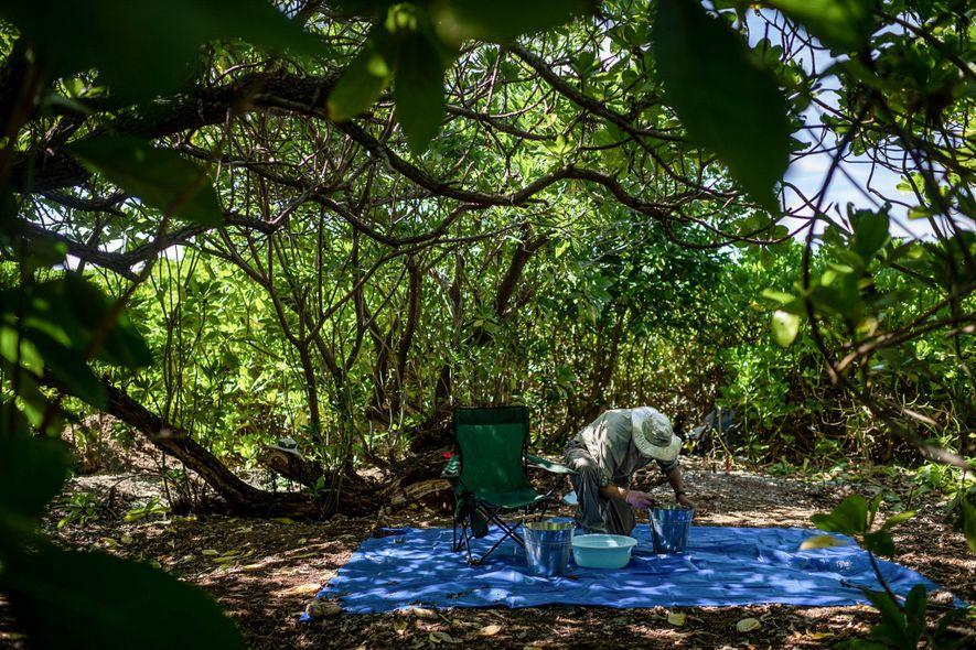 Tom King, ex-archéologue en chef pour le TIGHAR, examine le sol récupéré sur l'un des sites de Nikumaroro où Earhardt pourrait s'être abritée.