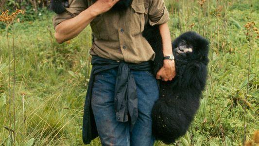 Dian Fossey, une vie consacrée à la protection des gorilles