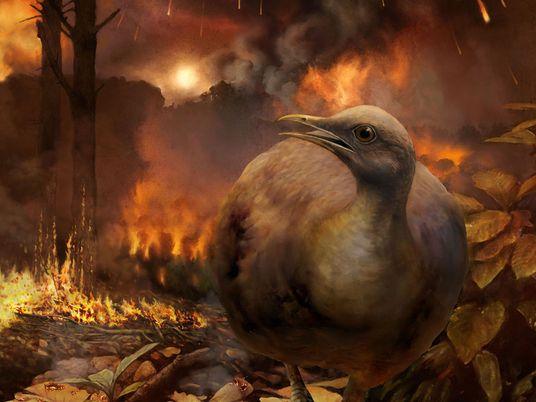 Comment des oiseaux de l'ère des dinosaures ont-ils survécu à l'extinction massive ?