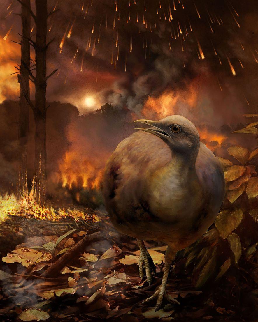 Ce dessin représente un petit oiseau non volant s'enfuir d'une forêt en feu. Il s'agirait d'une ...