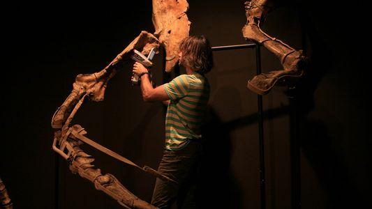 La contrebande de fossiles s'organise - la science contre-attaque