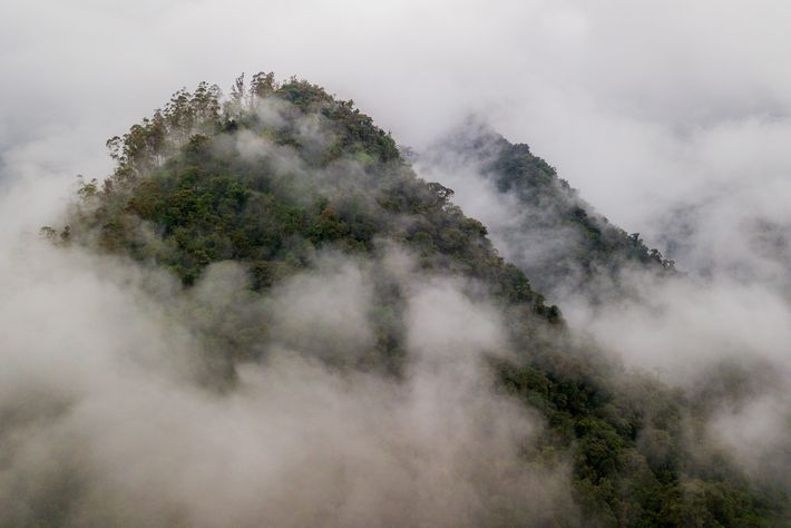 Les forêts tropicales de l'Ouest de l'Équateur font partie de la région du Chocó, un haut-lieu ...
